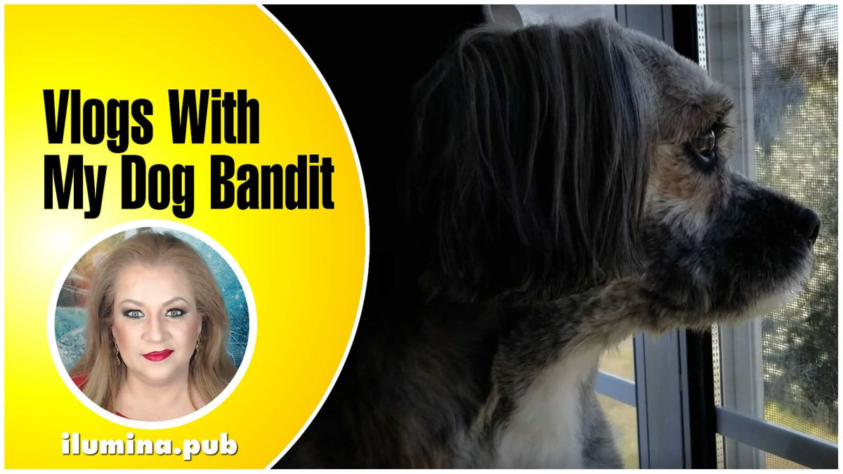 Vlogs With Bandit, My Dog
